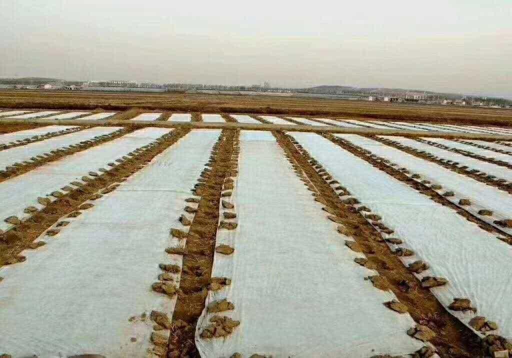 防草无纺布 园艺地布大量订做供货